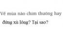 Bài C11 trang 78 sgk vật lí 8