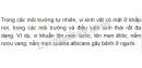 Câu 1, câu 2, câu 3 trang 91 sinh học lớp 10