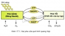 Bài 5 trang 70 SGK Sinh học 10