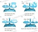 Bài 2, bài 3, bài 4, bài 5 Tiết 65 trang 66 sgk Toán 3
