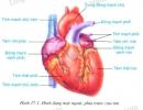 Xác định các loại mô và các bộ phận của tim.