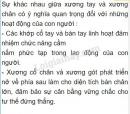 Bài 2 trang 27 SGK Sinh học 8