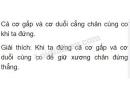 Bài 2 trang 33 SGK Sinh học 8