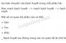 Bài 3 trang 53 SGK Sinh học 8