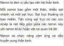 Câu 1 trang 138 sgk sinh lớp 8