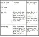 Bài 1 trang 146 SGK Sinh học 8