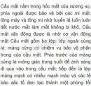 Bài 1 trang 158 SGK Sinh học 8