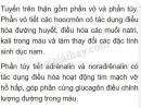 Bài 2 trang 181 SGK Sinh học 8