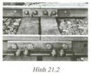 Bài C5 trang 66 sgk vật lí 6