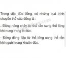 Bài C6 trang 79 SGK Vật lí 6