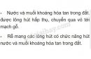 Bài 1, 2, 3 trang 39 SGK Sinh 6