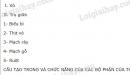 Bài 1 trang 50 SGK Sinh 6