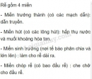 Bài 2 trang 31 SGK Sinh học 6