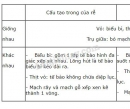 So sánh cấu tạo của miền hút và thân non - trang 50