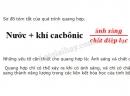 Bài 2 trang 72 SGK Sinh học 6