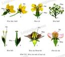 Quan sát từng hoa trong hình 29.1 hoặc hoa đã mang đến lớp, tìm xem mỗi hoa có bộ phận sinh sản nào chủ yếu rồi đánh dấu ✓ vào mục: Các bộ phận sinh sản chủ yếu của hoa trong bảng dưới đây.