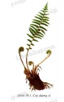 So sánh đặc điểm bên ngoài của thân, lá rễ cây dương xỉ với cây rêu - trang 128