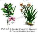 Quan sát kĩ H42.1: Căn cứ vào các đặc điểm của lá, rễ, hoa mà em biết có thể nhận biết được từ hình vẽ, hãy phân biệt cây 2 lá mầm và cây 1 lá mầm theo mẫu sau.