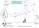 Quan sát H.46.1, hãy cho biết vai trò của thực vật đối với điều hòa lượng khí cacbonic và oxi trong không khí?
