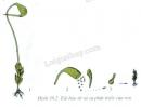 Túi bào tử thuộc cơ quan sinh sản. Nhìn các chi tiết trong H38.2 hãy cho biết rêu sinh sản phát triển nòi giống bằng gì và đặc điểm của túi bào tử?