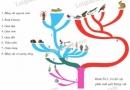 Quan sát, đọc chú thích trên sơ đồ cây phát sinh hình 56.3, trả lời những câu hỏi sau: Cho biết ngành chân khớp có quan hệ họ hàng gần gũi với ngành thân mềm hơn hay với động vật có xương sống hơn...