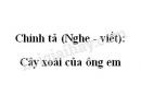 Chính tả (Nghe - viết): Cây xoài của ông em trang 93 SGK Tiếng Việt 2 tập 1