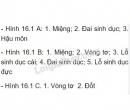 Ghi chú thích vào các hình 16.1A, B, C thay cho các số 1,2,3 ...