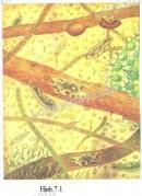 Hãy xem thành phần động vật nguyên sinh trong giọt nước ao (hình 7.1) thảo luận, nêu vai trò của chúng trong sự sống ở ao nuôi cá.