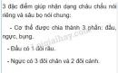 Bài 1 trang 88 SGK Sinh học 7