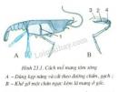 Thảo luận ý nghĩa đặc điểm lá mang với chức năng hô hấp dưới nước của mang và chú thích trực tiếp vào hình thay cho các con số: 1, 2, 3, 4.