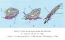 Lý thuyết đặc điểm chung và vai trò của ngành thân mềm