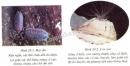 Lý thuyết đa dạng và vai trò của lớp giáp xác