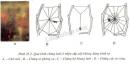 Lý thuyết nhện và sự đa dạng của lớp hình nhện