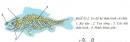 Dựa vào hình 33.2 hãy nêu rõ các bộ phận của hệ thần kinh ở cá. Dựa vào hình 33.3 trình bày các thành phần cấu tạo của bộ não cá chép.