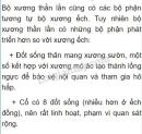 Bài 1 trang 129 SGK Sinh học 7