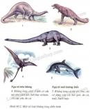Nêu đặc điểm của khủng long cá, khủng long cánh và khủng long bạo chúa.