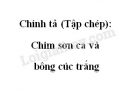 Chính tả (Tập chép): Chim sơn ca và bông cúc trắng trang 25 SGK Tiếng Việt 2 tập 2