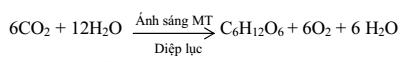 phương trình tổng quát quang hợp