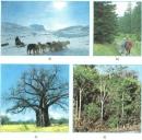 Quan sát hình 20.4, mô tả các cảnh quan trong ánh. Các cảnh quan đó thuộc những đới khí hậu nào?