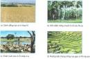 Dựa vào hình 21.1 và kiến thức đã học, cho biết: Hoạt động nông nghiệp đã làm cảnh quan tự nhiên thay đổi như thế nào?