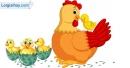 Viết đoạn văn tả gà mẹ và đàn gà con
