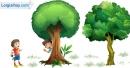 Viết đoạn văn tả vẻ đẹp cây bóng mát