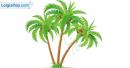 Tả cây dừa nơi vườn quê