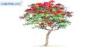 Viết đoạn văn tả cây phượng trên sân trường