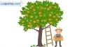 Viết đoạn văn tả cây quýt