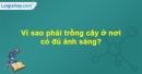 Câu hỏi 3 trang 41 Vở bài tập Sinh học 6