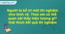 Câu hỏi 4 trang 43 Vở bài tập Sinh học 6