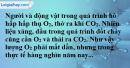 Bài 24.5 trang 33 SBT hóa học 8
