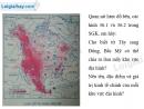 Bài 1 trang 31 Tập bản đồ Địa lí 7