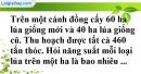 Bài 43 trang 14 SBT toán 9 tập 2